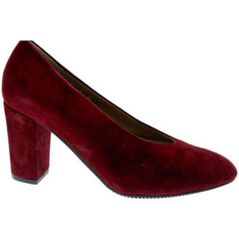 Čevlji  Ženske Salonarji Calzaturificio Loren LO60887bo nero
