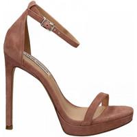 Čevlji  Ženske Sandali & Odprti čevlji Steve Madden MILANO SUEDE mauve