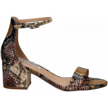 Čevlji  Ženske Sandali & Odprti čevlji Steve Madden IRENEE snake