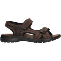Čevlji  Moški Športni sandali Imac 503370 Brown