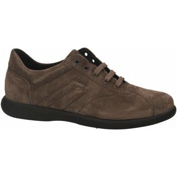 Čevlji  Moški Čevlji Derby Frau WAXY lab