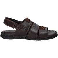 Čevlji  Moški Sandali & Odprti čevlji Valleverde 20831 Rjav