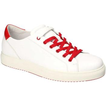 Čevlji  Moški Nizke superge IgI&CO 3132700 Biely