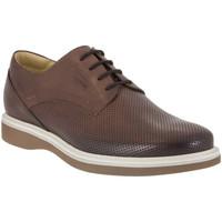Čevlji  Moški Čevlji Derby IgI&CO 1107 Rjav