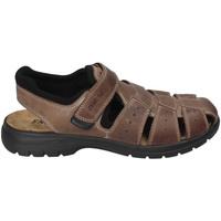 Čevlji  Moški Sandali & Odprti čevlji Enval 3247522 Rjav