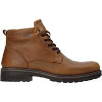 Čevlji  Moški Polškornji IgI&CO 4122422 Rjav