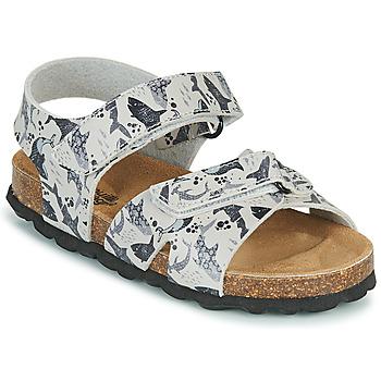 Čevlji  Dečki Sandali & Odprti čevlji Citrouille et Compagnie OMAYO Siva
