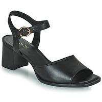 Čevlji  Ženske Sandali & Odprti čevlji Minelli TURINA Črna