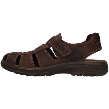Čevlji  Moški Sandali & Odprti čevlji Enval 7219111 BROWN