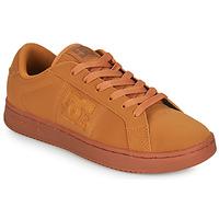 Čevlji  Moški Nizke superge DC Shoes STRIKER Kamel